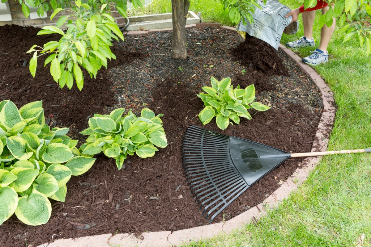 Shrub Garden Care Armbruster Landscaping